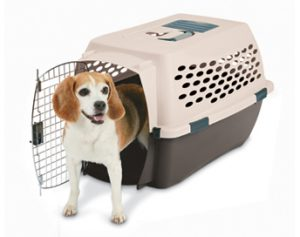 kennel_cab_beagle